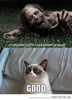 Grumpy cat during the zombie apocalypse…gosh this cat gets me everytime!