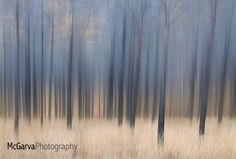 Abstract Larches by McGarva Photography on 500px, Vaseline lens.