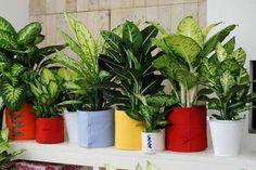 A chaque intérieur, sa plante verte