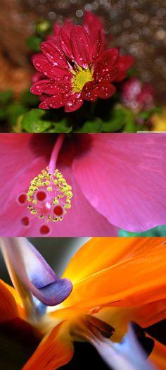 Beautiful Nice Flower