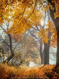 Autumn in Bory Tucholskie, Poland