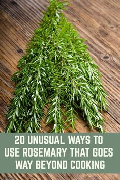 how to grow plants Rosemary is one of the most aromatic and pungent herbs around, here are 20 creative ways to use this wonderful versatile herb and not just in recipes.