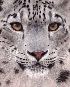 Изображение Дикой Прироты, Картины Животных, Дымчатый Леопард, Кошачий Арт, Dibujo, Леопарды, Тигры, Создание Гравюр И Эстампов, Искусство