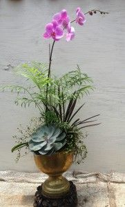 succulent and orchid arrangement...one gorgeous orchid goes a long way.  Maybe 3 for a larger table.