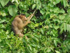 Jungle Treks & Tours from Bukit Lawang N. Sumatra - Experience Wild Jungles, Breathtaking Landscapes and Authentic Culture with TrekSumatra Gunung Leuser National Park, National Parks, Orangutan, Trek, Tours, Landscape, Scenery, Corner Landscaping