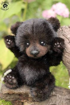 Bear cub Kuzya By Evgeniya and Igor Krasnov - Bear Pile
