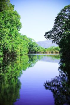 Black River, Jamaica - A big story for me with crocodiles, mine, and God #CFCUBoardtoBoard