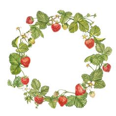 Strawberry Art, Fruits Drawing, Wreath Drawing, Watercolor Painting Techniques, Floral Drawing, Fruit Art, Hand Embroidery Patterns, Handmade Design, Botanical Illustration