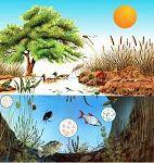 Ecosistemas Terrestres: Tipos de ecosistemas terrestres