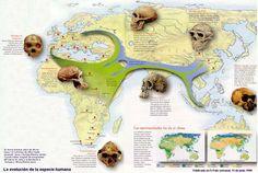 La clasificación de los seres humanos como uno más de los animales que pueblan la Tierra se establece siguiendo las mismas pautas que para éstos: el hombre pertenece al tipo cordados, clase mamífer…