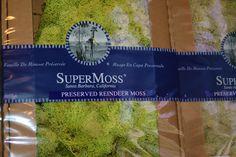 Preserved Reindeer Moss