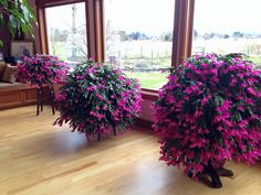Cactus on pinterest christmas cactus easter cactus and cactus