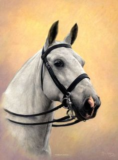 Gallery of examples of commissioned head & neck portraits of horses by Yorkshire's leading equine portrait artist Mike Haken Horse Drawings, Animal Drawings, Pretty Horses, Beautiful Horses, Horse Sketch, Horse Portrait, Pencil Portrait, Horse Posters, Horse Artwork
