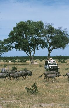 Photographic Safaris in the Okavango Delta in Botswana. image: Botswana Explorer