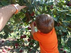 This is a great site. Where to Find Pick-Your-Own Fruit and Vegetable Farms / Orchards for Local, Fresh Fruit, Vegetables and Pumpkins, Along With Canning, Freezing & Preserving Instructions!