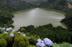 The island of Flores has deep valleys and high peaks, lagoons bordered by hydrangeas, cliffs carved by grottoes, hot springs and the remains of old volcanoes.  https://www.facebook.com/Maladviagem/