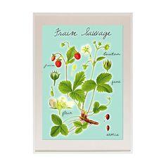 Neu A3 Erdbeer Poster für die Küche