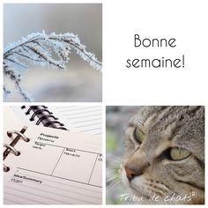 "broderie Fensterbild blanc Pendentif /""arrosoir/"" 10 CM"