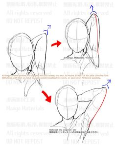 Learning To Draw: You Are Gonna Need a Pencil Anatomy Sketches, Anime Drawings Sketches, Anatomy Drawing, Anatomy Art, How To Draw Anatomy, Horse Drawings, Body Reference Drawing, Drawing Reference Poses, Anatomy Reference