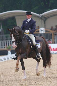Björsells Briar  「Magini x Charis」  Swedish Warmblood Stallion