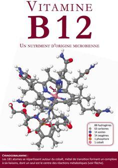 Vitamine B12 : document à destination des professionnels de santé - Fédération végane