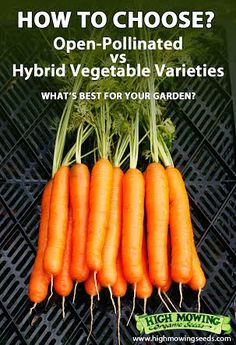 Difference between open-pollinated and hybrid vegetable seeds! GREAT stuff!