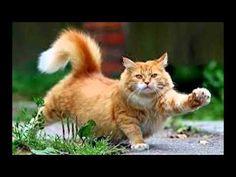 Best Cute Kittens - Most Cute Kittens Love: Best Compilation TOP 10 https://www.youtube.com/watch?v=MhmdKlDmTd4&list=PLC_HjotBFMpMqQXjRjMlL4vrV4IZEkPJ7
