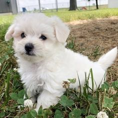 CHLOE Little Diva, Little Girls, Cute Baby Dogs, Female Names, Beautiful Baby Girl, Cute Faces, Love People, Prince Charming, Maltese