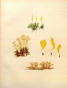 fungi?