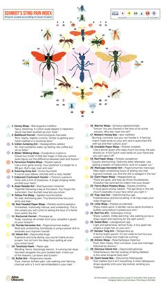 The Schmidt sting pain index is a pain scale rating the relative pain caused by different hymenopteran stings | It is mainly the work of Justin O. Schmidt, an entomologist