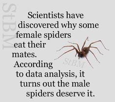 Edderkop - edderkop!
