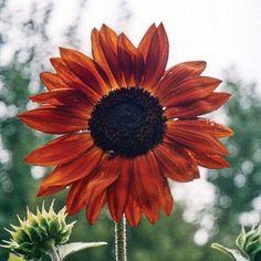 Paper Pot, Sunflower Cards, Lawn And Landscape, Home Vegetable Garden, Colorful Plants, Garden Seeds, Winter Garden, Flower Beds, Garden Planning