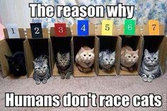The reason why humans don't race cats