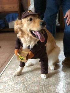 Cute Animal Memes, Cute Animal Photos, Animal Jokes, Cute Funny Animals, Funny Cute, Super Cute Animals, Cute Little Animals, Funny Dog Memes, Funny Dogs