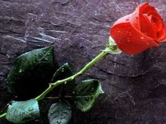 Something about a single red rose that is oh so romantic. I admit my absolute favorite flower is the classic red rose.