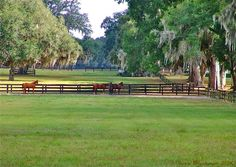 this could be a corner of one of the broodmare paddocks in Cotswold Farms where Other People's Horses begins. Places In Florida, Visit Florida, Florida Living, Florida Travel, Ocala Florida, Dream Stables, Ranch Life, Farms Living, Horse Farms