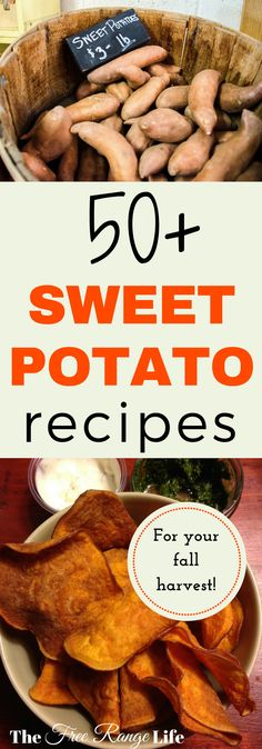 Sweet potatoes are sweet and filling, as well as full of nutrition- containing high levels of Beta Carotene. Find over 50 recipes using sweet potatoes in this recipe roundup!