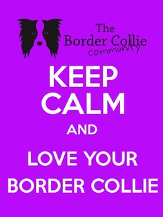 Keep calm and LOVE YOUR BORDER COLLIE ❤ #thebordercolliecommunityfacebook