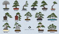 The bonsai styles