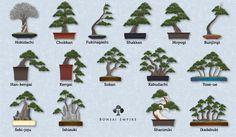 http://www.bonsaiempire.com/images/bonsai-styles.jpg