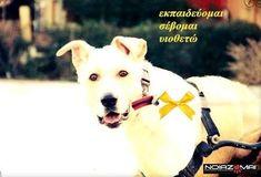 Φιλοζωική Θεσσαλονίκης: Κίτρινη κορδέλα στο σκύλο σας, για προειδοποίηση! Dogs, Animals, Animales, Animaux, Pet Dogs, Doggies, Animal, Animais