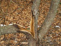 Cómo curar las heridas de tus árboles, ¡es posible!