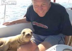 Un bébé lion de mer s'invite sur un bateau pour venir faire des câlins?!