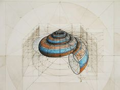 """""""CALCULATION"""" DRAWINGS BY RAFAEL ARAUJO: Using only a pencil, ruler and protractor, Venezuelan artist Rafael Araujo creates these beautiful renderings of the three dimensional space butterflies occupy and the mathematical spirals of sea shells."""