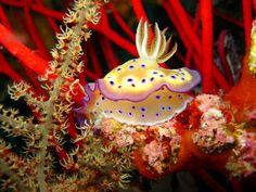 (Alicia Mirabilis) Underwater Life, Underwater Photos, Weird Sea Creatures, Beneath The Sea, Under The Ocean, Cool Fish, Sea Slug, Life Aquatic, Deep Blue Sea