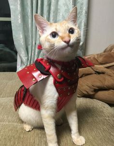 Samurai Armor for Pets - A company in Japan called 'Samurai Age' has released a collection of samurai armor for pets. The snap-on armor was initially created . Crazy Cat Lady, Crazy Cats, Kittens In Costumes, Cat Armor, Animals And Pets, Cute Animals, All Types Of Cats, Cats Musical, Samurai Armor