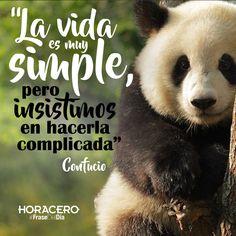 """""""La vida es simple, pero insistimos en hacerla complicada"""" Confucio #Frases #FraseDelDía #Citas"""