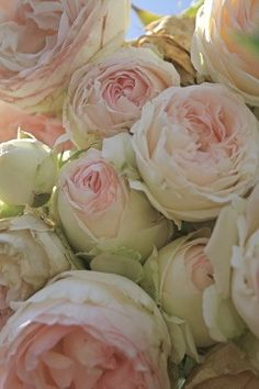 RoSeS, RoSeS, RoSeS Heirloom roses Wedding cake ~ w/fresh blush colored roses Anemone Hydrangea Garden Rose Bouquet these flowers are lovel. My Flower, Flower Power, Beautiful Flowers, Cactus Flower, Beautiful Beautiful, Flower Wall, Beautiful Images, Heirloom Roses, Cabbage Roses
