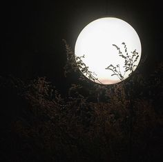 Imagen de moon, aesthetic, and black