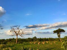 Kruger National Park, Timeline, Wildlife, Africa, Clouds, Facebook, Sunset, Photography, Outdoor